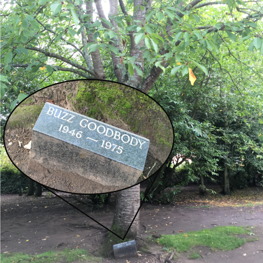 A tree with a plaque commemorating Buzz Goodbody