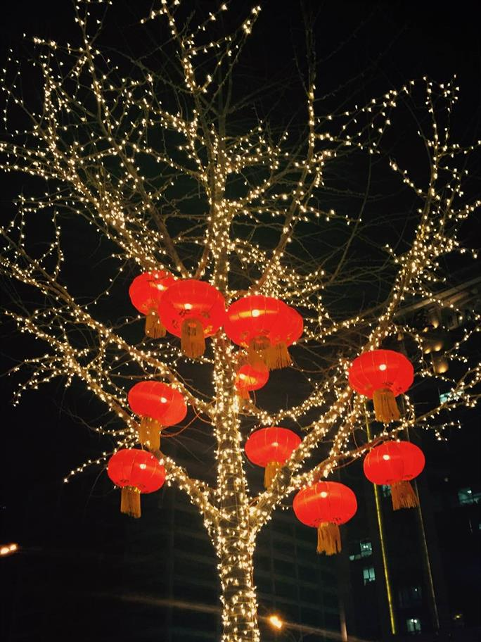 A tree decorated with fairy lights and red lanterns for Chinese New Year