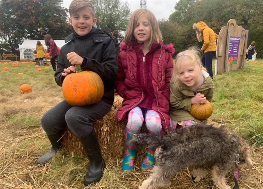 a boy and 2 girls and a dog sitting on a tree stump in a field with pumpkins