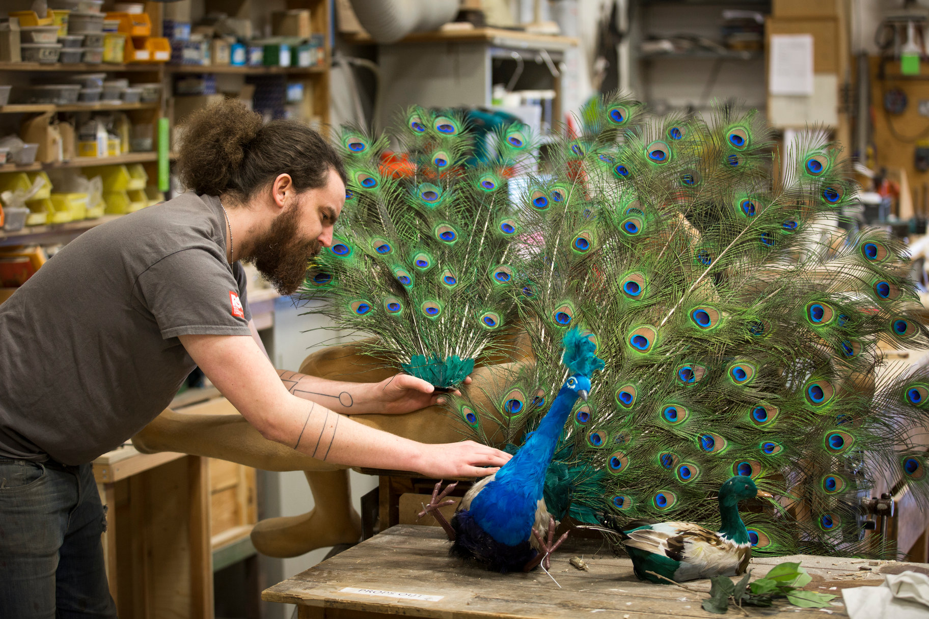 Bearded man working on a model of a peacock with fanned out tail