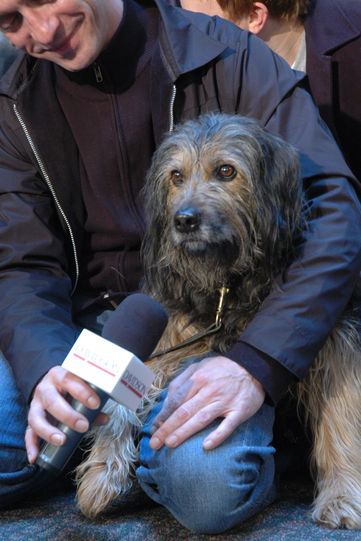 A man holds a microphone in front of a confused canine