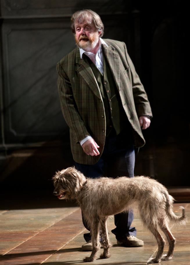 Man in a suit jacket looking tired in front of a scruffy-looking dog